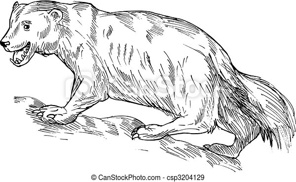 Wolverines Illustrations and Clipart 127 Wolverines royalty free