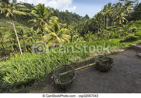 Green rice fields on Bali island, Jatiluwih near Ubud, Indonesia - csp32067043
