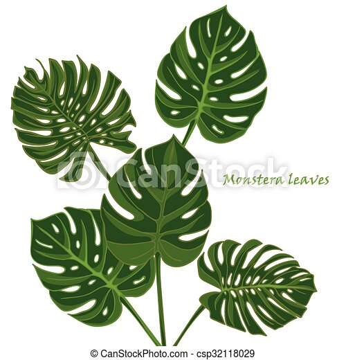 illustration vecteur de exotique feuilles monstera. Black Bedroom Furniture Sets. Home Design Ideas