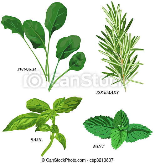 Herbs - csp3213807