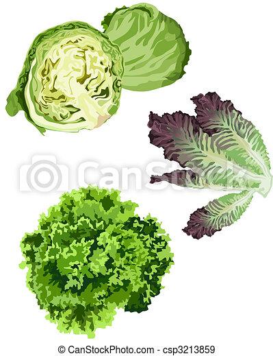 Lettuce - csp3213859
