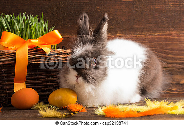 easter bunny - csp32138741