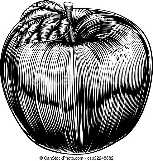 Vintage Woodcut Apple - csp32248882