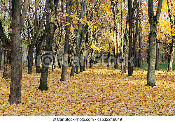 Autumn park with trees and yellow leaves - csp32249049