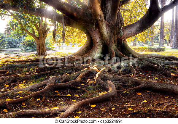 Centenarian Tree - csp3224991