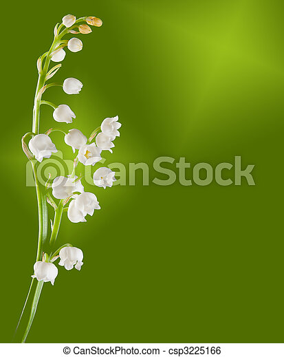 Lilly-of-the-valley twig - csp3225166