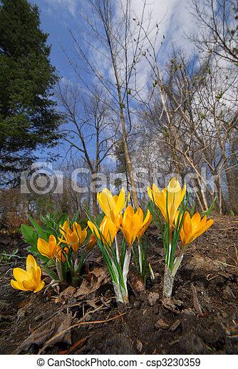 Spring sprang - csp3230359