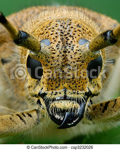 Bug at a dawn - csp3232026