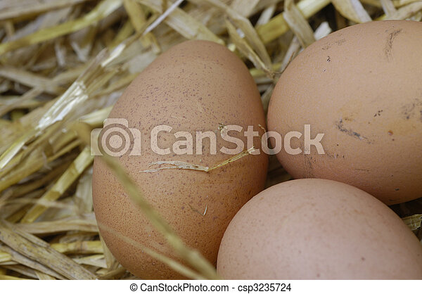 fresh farm eggs - csp3235724