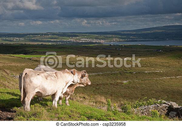 landscape of rural ireland, west coast ireland - csp3235958