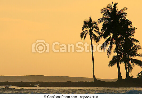 Coconut palm trees silhoutted against orange sunset - csp3239125