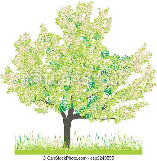 Cherry tree in spring - csp3240555