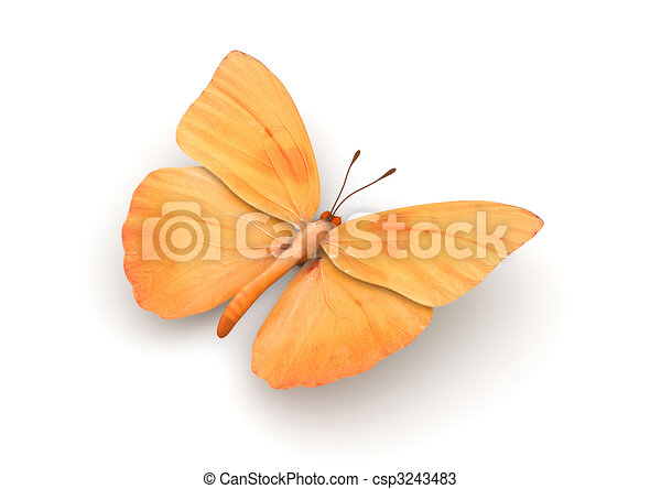 Orange Butterfly Isolated - csp3243483