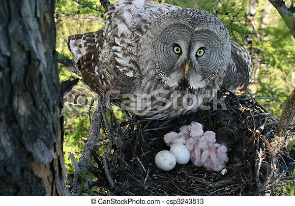 owl with nestling in jack - csp3243813