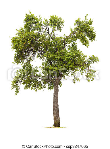 樹 - csp3247065