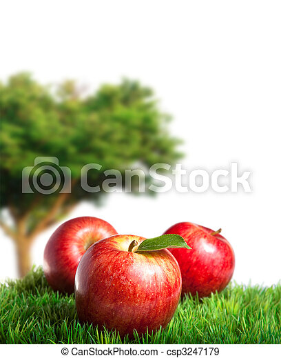 Apple Harvest - csp3247179