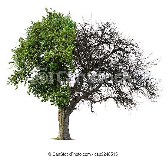 Isolated Apple Tree - csp3248515