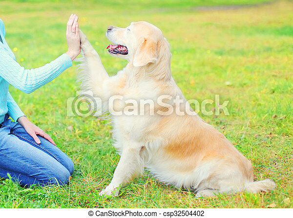 Owner training Golden Retriever dog on grass in park, giving paw