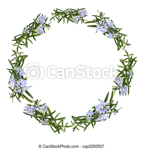Rosemary Herb Flower Garland - csp3250507
