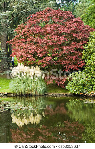 vermelho, Acer, árvore - csp3253637