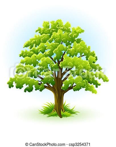 single oak tree with green leafage - csp3254371