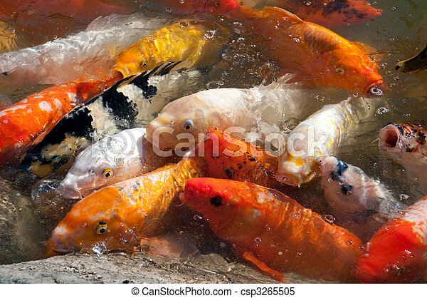 Stock im genes de koi pez charca csp3265505 buscar for Pez koi pequeno