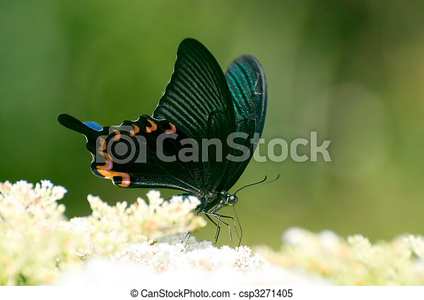 Swallowtail butterfly on the flower - csp3271405