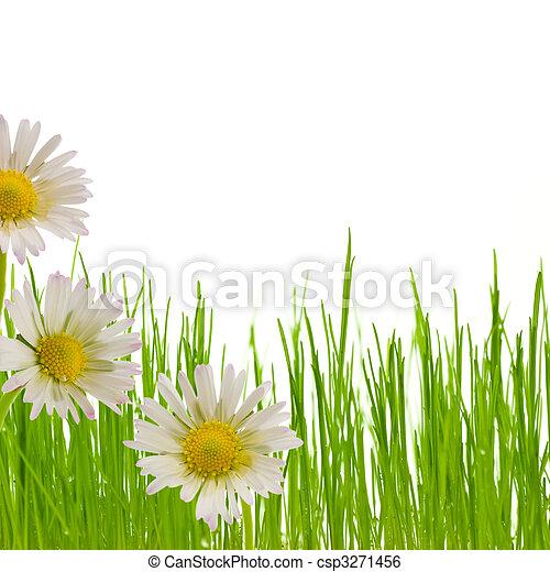 daisy flower, floral design spring season - csp3271456