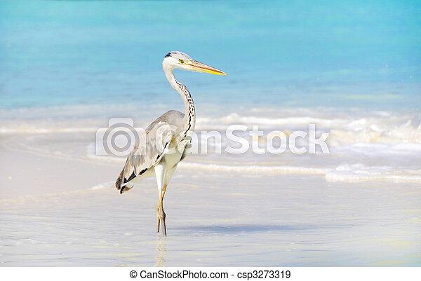 seabird - csp3273319