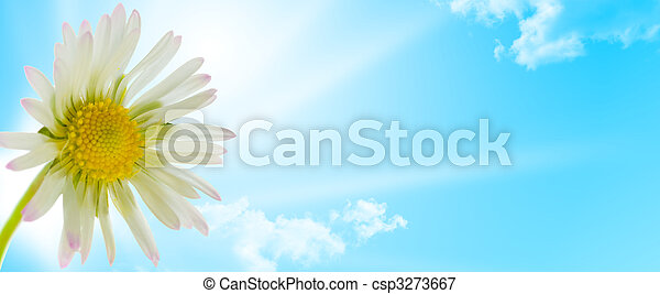 flor, primavera, margarida, desenho, estação,  floral - csp3273667