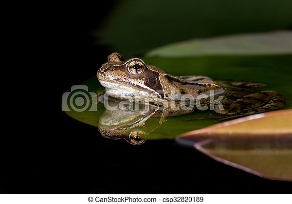 Common Frog (Rana Temporaria) - csp32820189