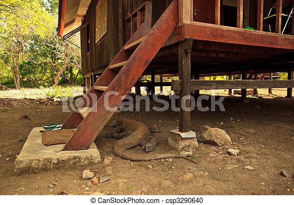 Komodo Dragon(Varanus komodoensis) Under Steps of House - csp3290640
