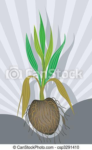Archivio illustrazioni di noce di cocco pianta for Pianta di cocco