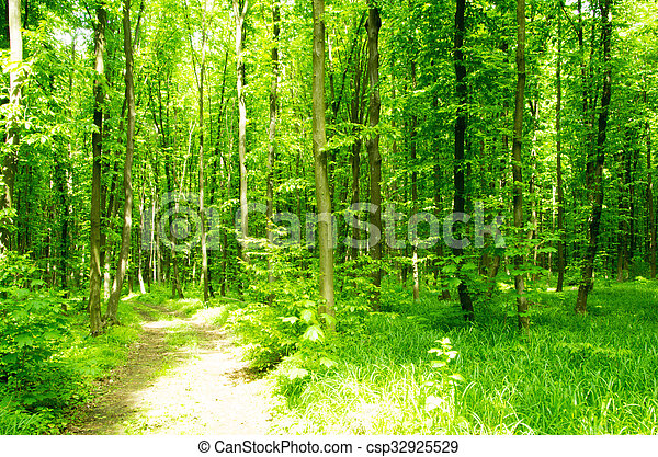 Subtropical forest - csp32925529