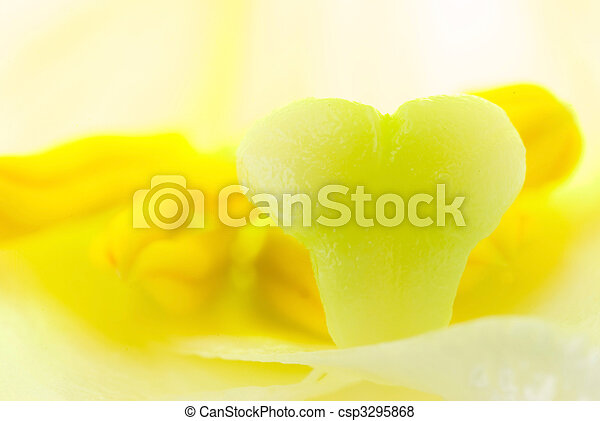 interior of white lily flower, detail of pistil and stamen  - csp3295868