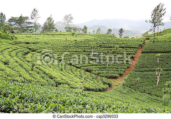 photos de pays montagne rang es lanka tea plantations sri csp3299333 recherchez des. Black Bedroom Furniture Sets. Home Design Ideas