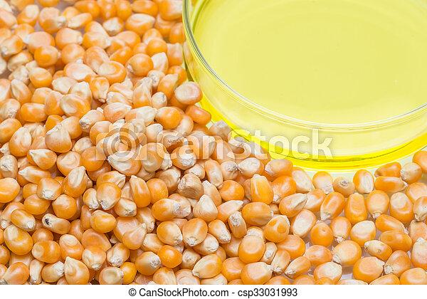 Research corn energy, biofuel and gmo in laboratory, yellow liquid in Petri Dish