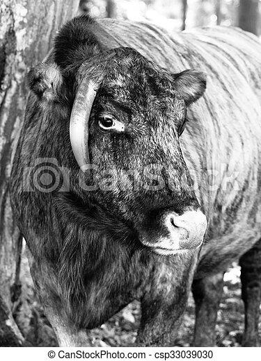 Archivi fotografici di zubron ibrido bisonte for Piani di architetto domestico