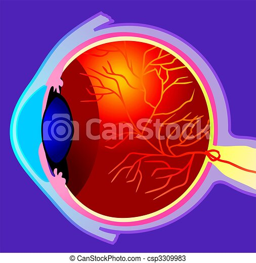 globo ocular - csp3309983