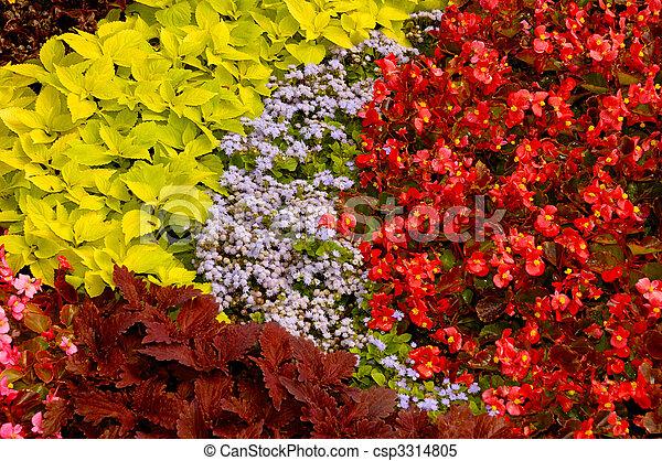 Flower Arrangement Background - csp3314805