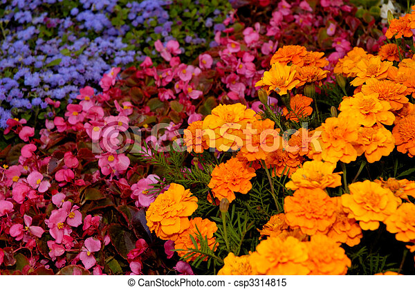 Flower Arrangement Background - csp3314815