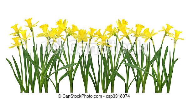 Daffodil banner - csp3318074