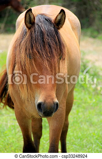 Image of wild horse with long mane covering his eyes, wandering around the island