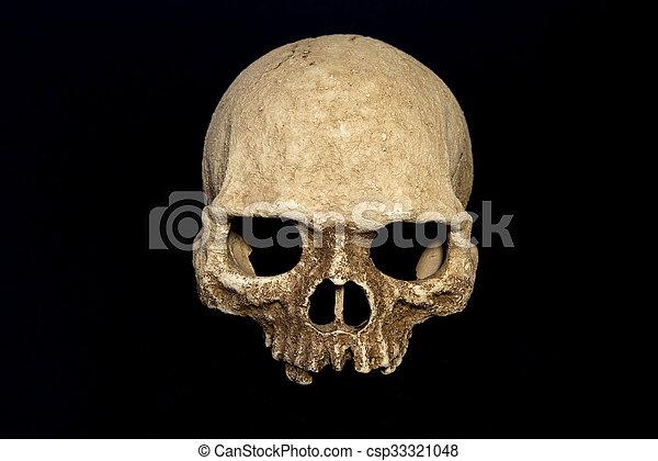 primate skull isolate black background
