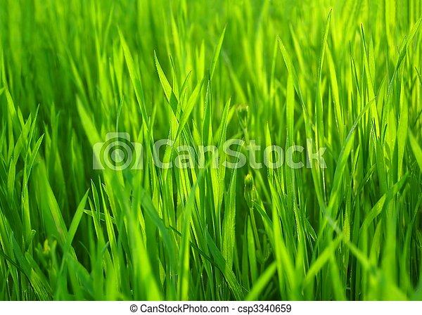 Fresh Spring Green Grass. Natural Grass Background - csp3340659