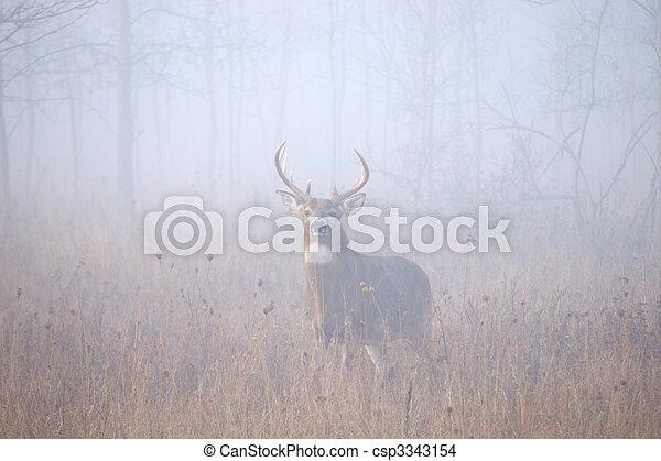 Whitetail Deer Buck - csp3343154