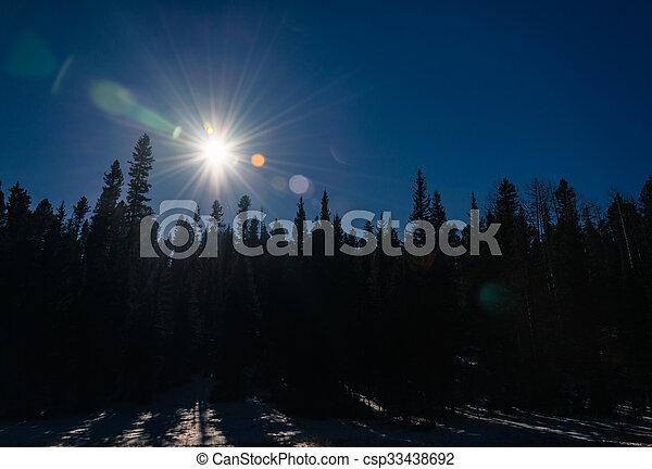 Sun shine and sun flare through the forest in dark theme