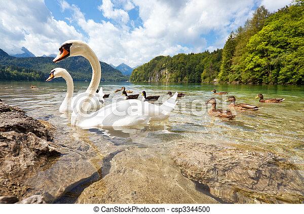 Alps lake with birds - csp3344500