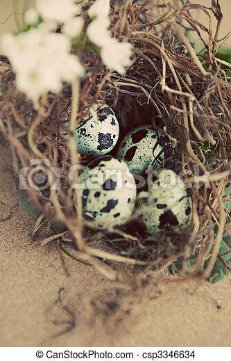 vintage quail nest with eggs - csp3346634