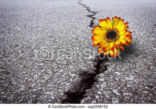Flower in asphalt - csp3348152